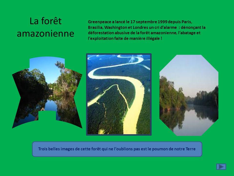 La forêt amazonienne Greenpeace a lancé le 17 septembre 1999 depuis Paris,