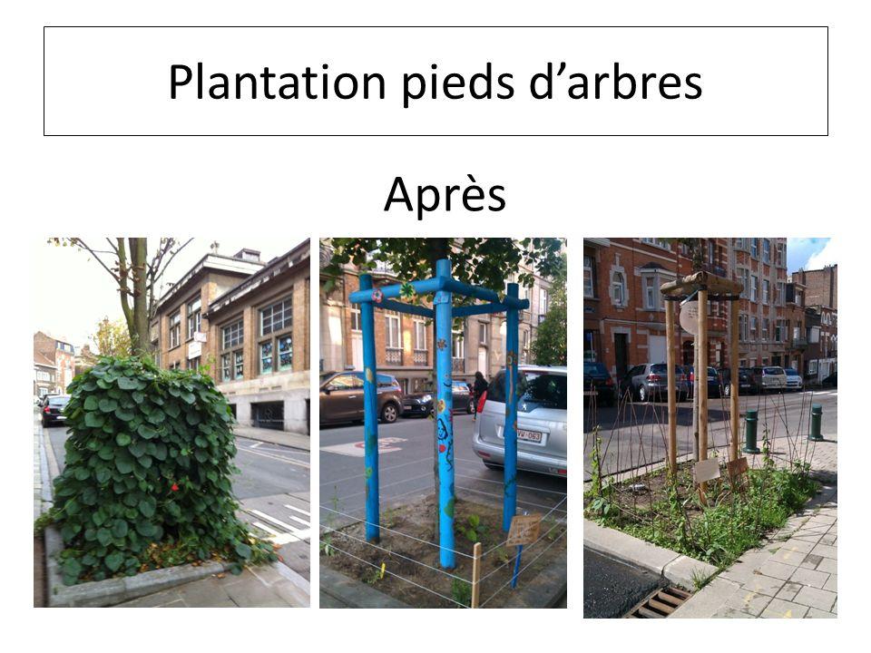 Plantation pieds d'arbres