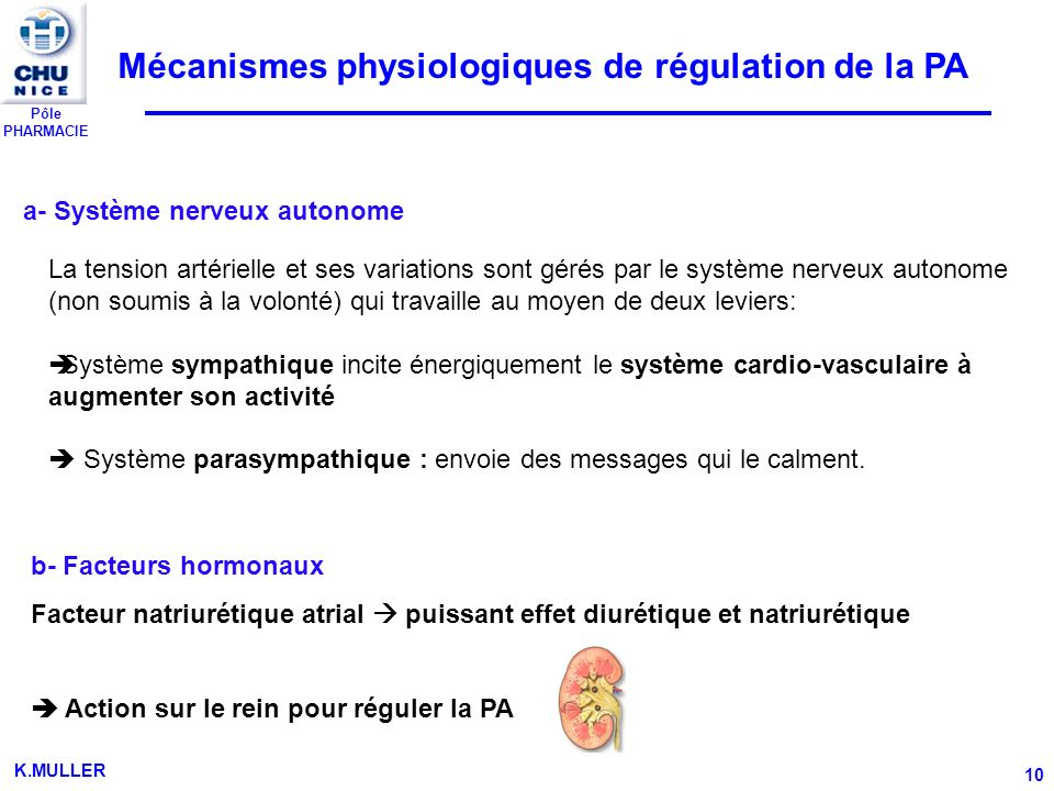 Mécanismes physiologiques de régulation de la PA