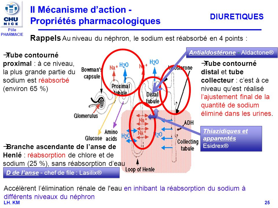 II Mécanisme d'action - Propriétés pharmacologiques
