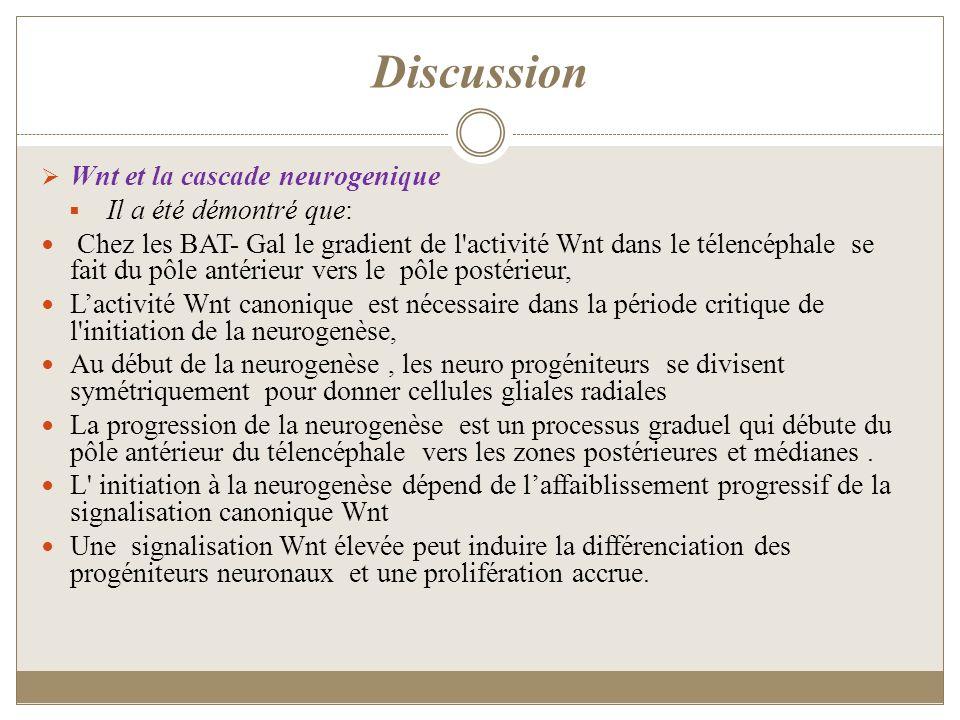 Discussion Wnt et la cascade neurogenique Il a été démontré que: