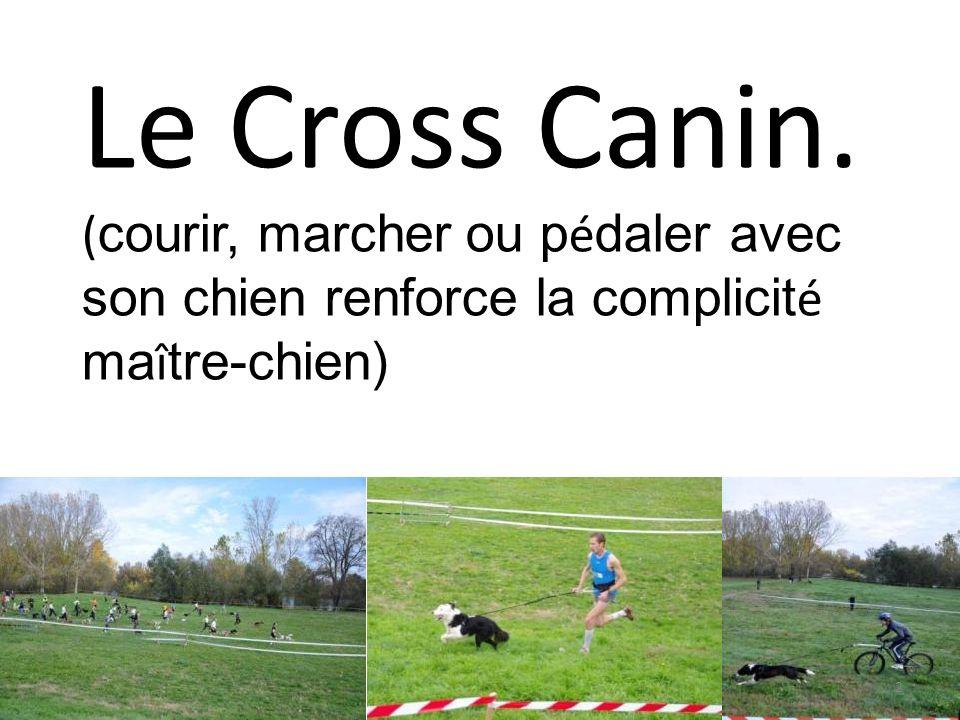 Le Cross Canin. (courir, marcher ou pédaler avec son chien renforce la complicité maître-chien)