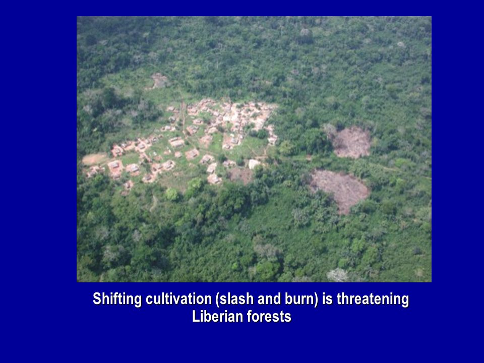 Shifting cultivation (slash and burn) is threatening