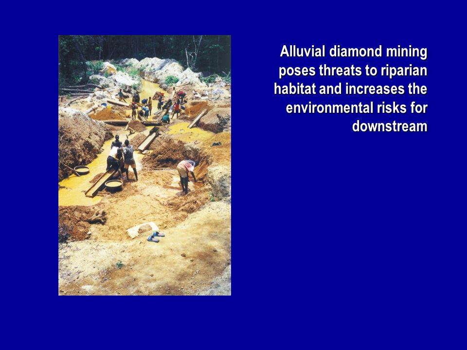 Alluvial diamond mining poses threats to riparian habitat and increases the environmental risks for downstream