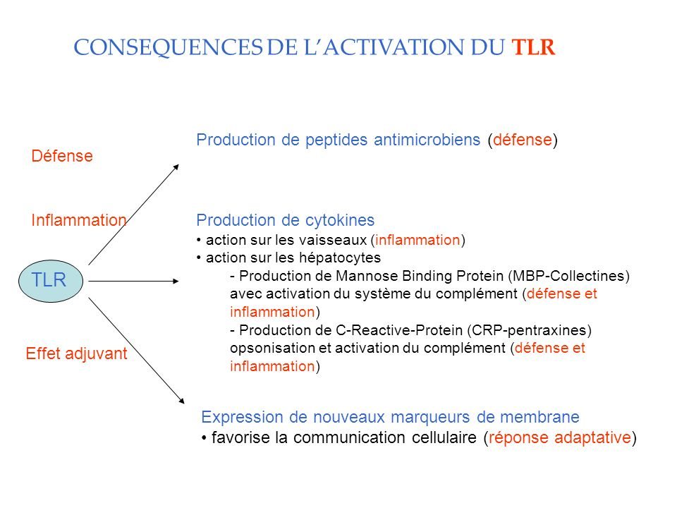CONSEQUENCES DE L'ACTIVATION DU TLR