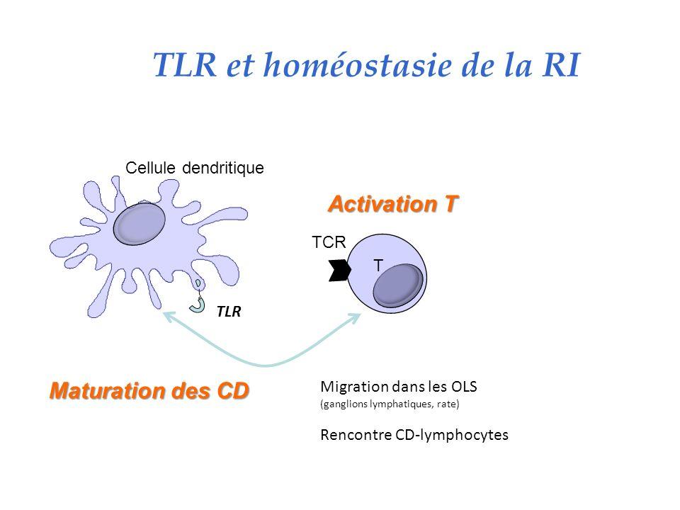 TLR et homéostasie de la RI
