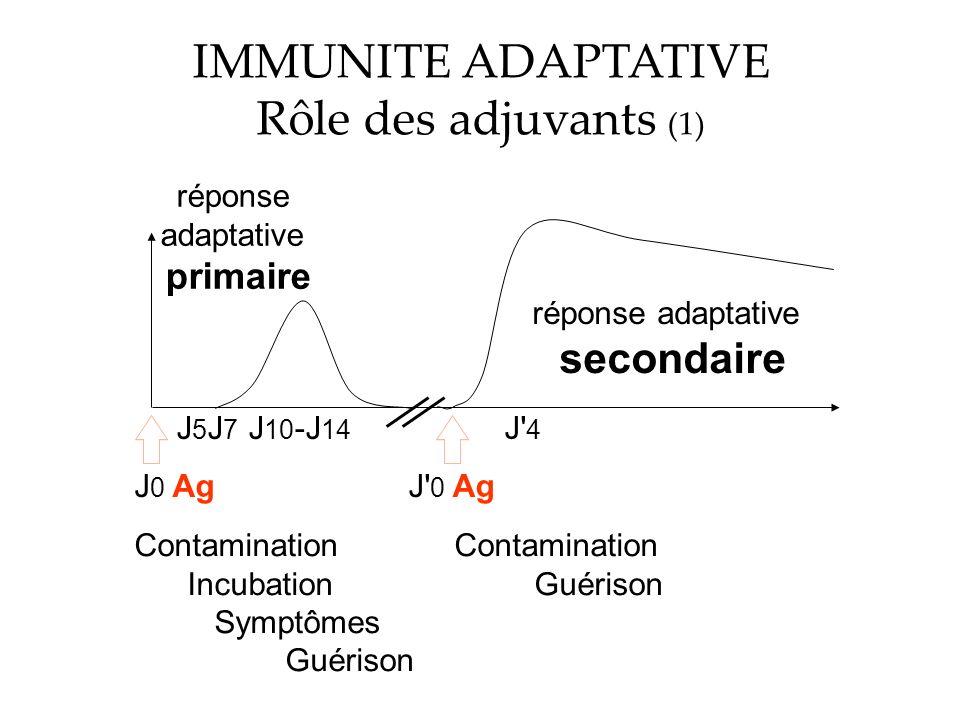 IMMUNITE ADAPTATIVE Rôle des adjuvants (1) secondaire primaire réponse