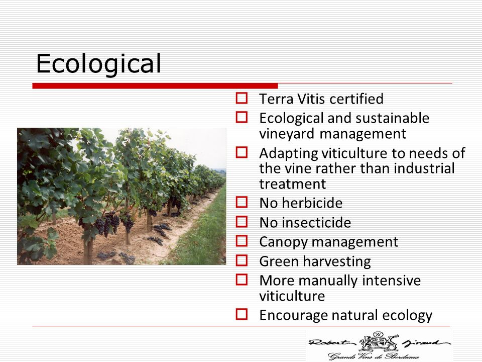 Ecological Terra Vitis certified