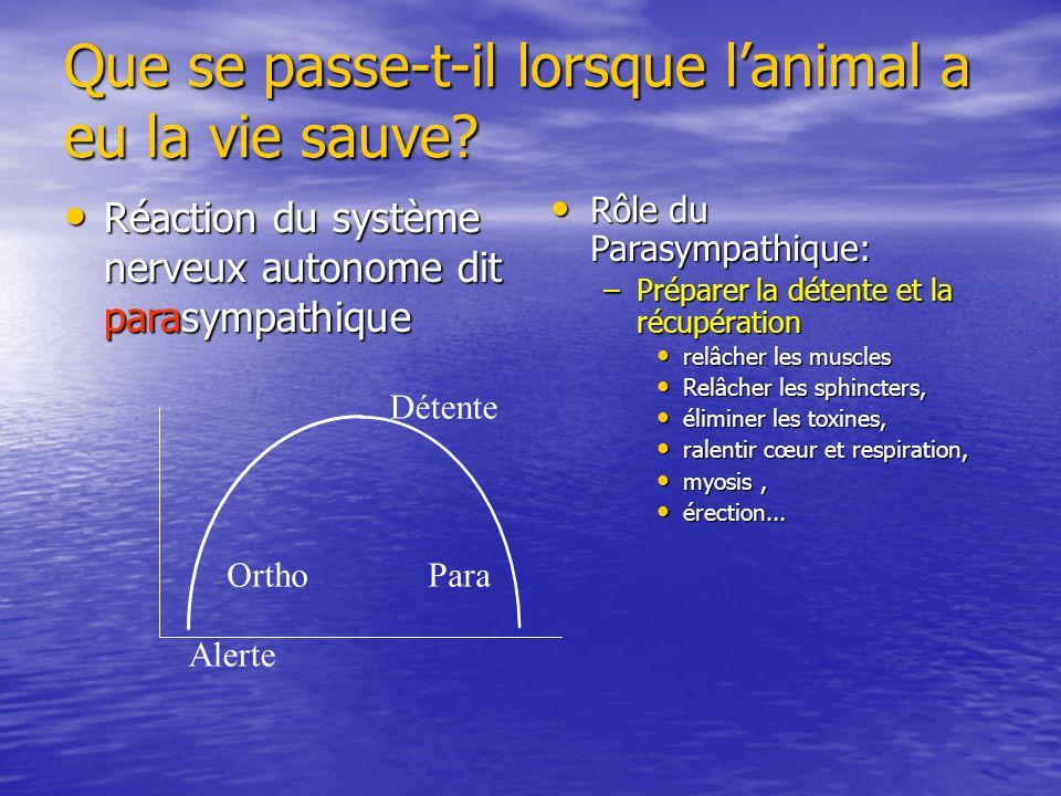 Que se passe-t-il lorsque l'animal a eu la vie sauve