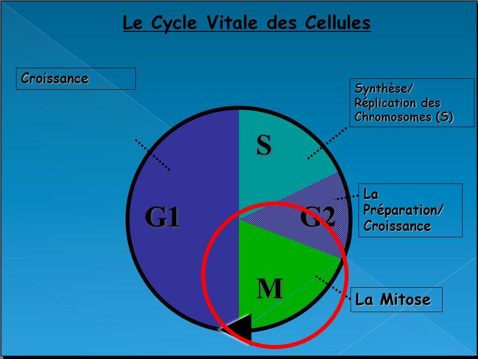 Le Cycle Vitale des Cellules
