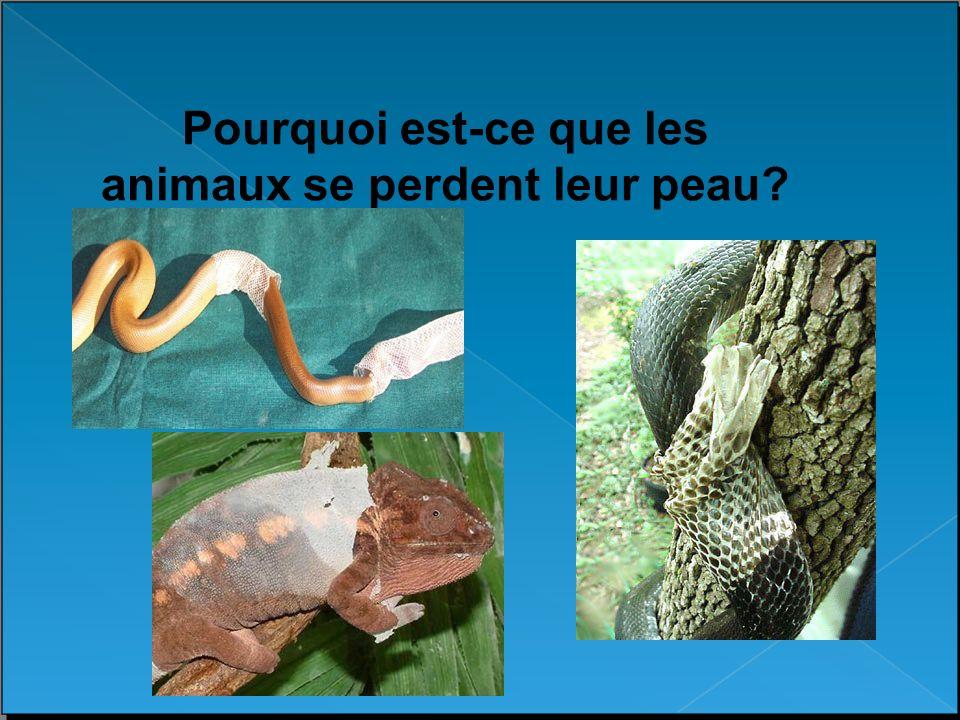 Pourquoi est-ce que les animaux se perdent leur peau
