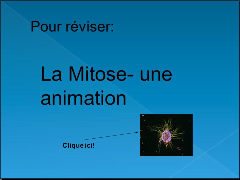 La Mitose- une animation