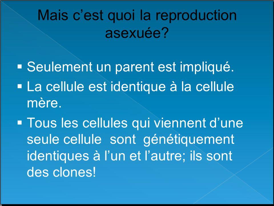 Mais c'est quoi la reproduction asexuée