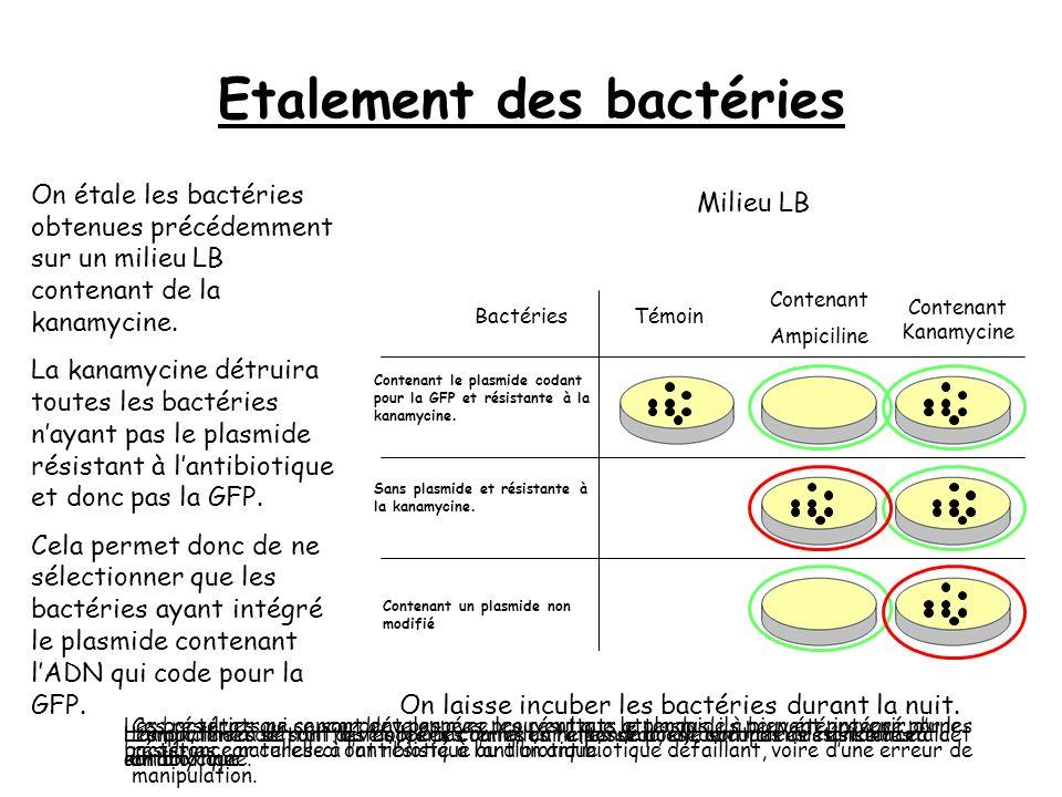 Etalement des bactéries