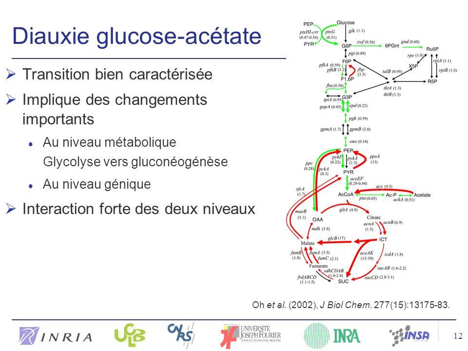 Diauxie glucose-acétate
