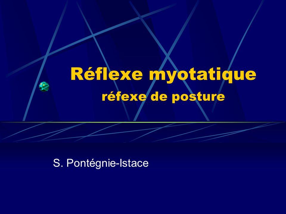 Réflexe myotatique réfexe de posture