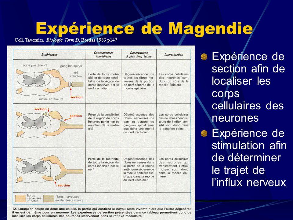 Expérience de Magendie