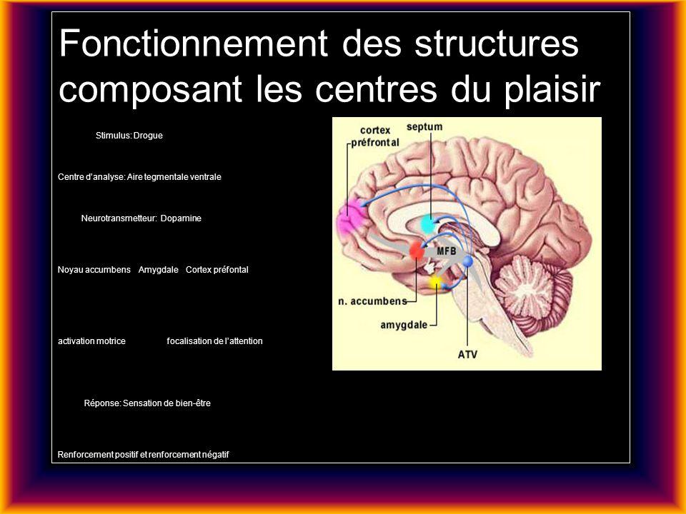 Fonctionnement des structures composant les centres du plaisir Stimulus: Drogue Centre d'analyse: Aire tegmentale ventrale Neurotransmetteur: Dopamine Noyau accumbens Amygdale Cortex préfontal activation motrice focalisation de l'attention Réponse: Sensation de bien-être Renforcement positif et renforcement négatif