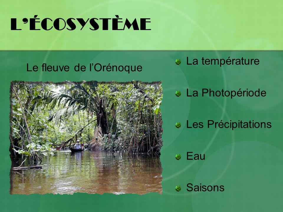 L'ÉCOSYSTÈME La température Le fleuve de l'Orénoque La Photopériode