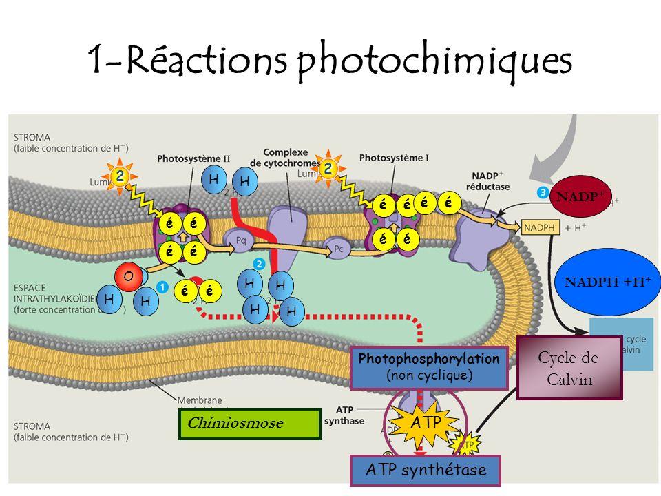 1-Réactions photochimiques