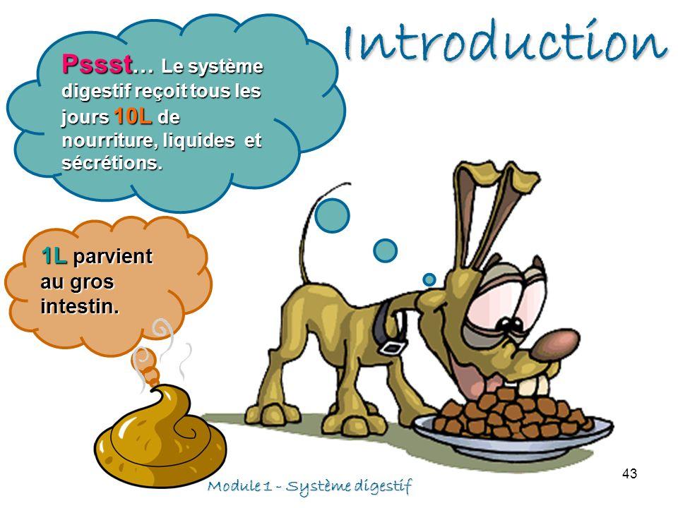 Introduction Pssst… Le système digestif reçoit tous les jours 10L de nourriture, liquides et sécrétions.