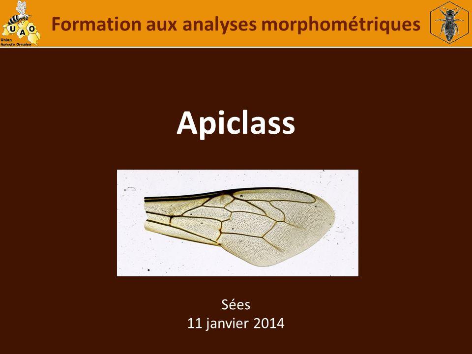 Formation aux analyses morphométriques