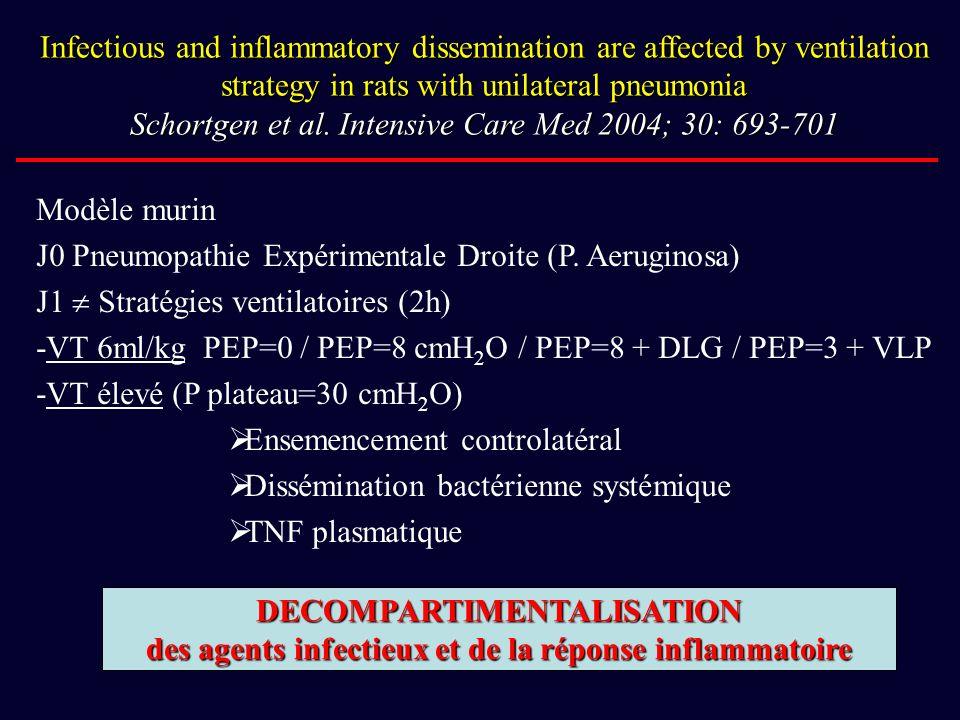 J0 Pneumopathie Expérimentale Droite (P. Aeruginosa)