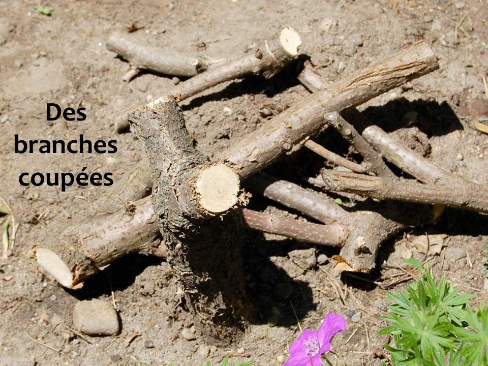 Des branches coupées