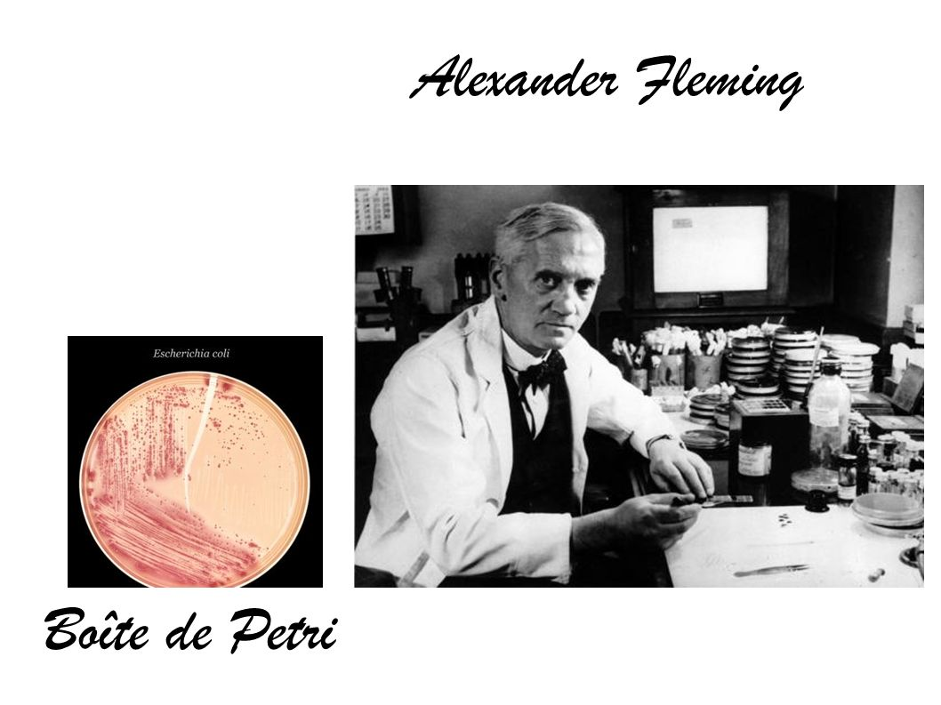 Alexander Fleming Boîte de Petri