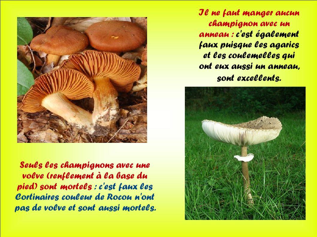 Il ne faut manger aucun champignon avec un anneau : c est également faux puisque les agarics et les coulemelles qui ont eux aussi un anneau, sont excellents.