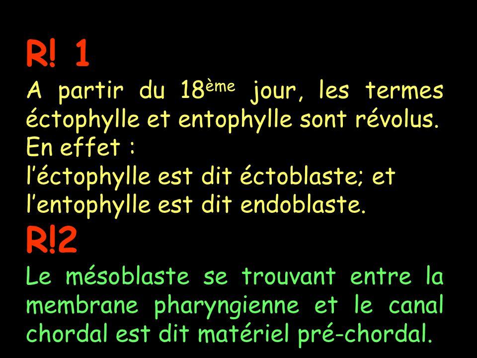 R! 1 A partir du 18ème jour, les termes éctophylle et entophylle sont révolus. En effet : l'éctophylle est dit éctoblaste; et.