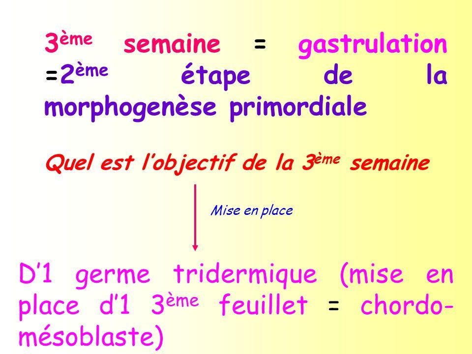 3ème semaine = gastrulation =2ème étape de la morphogenèse primordiale