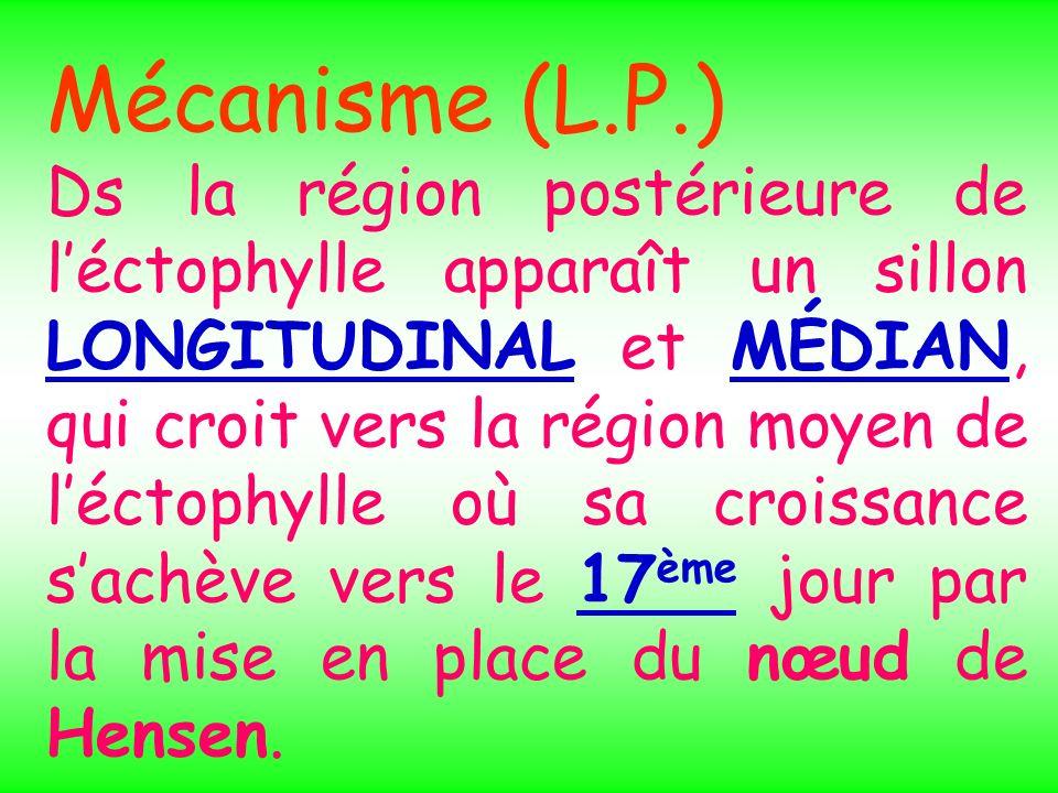 Mécanisme (L.P.)