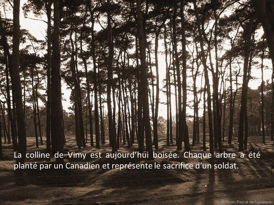 La colline de Vimy est aujourd'hui boisée
