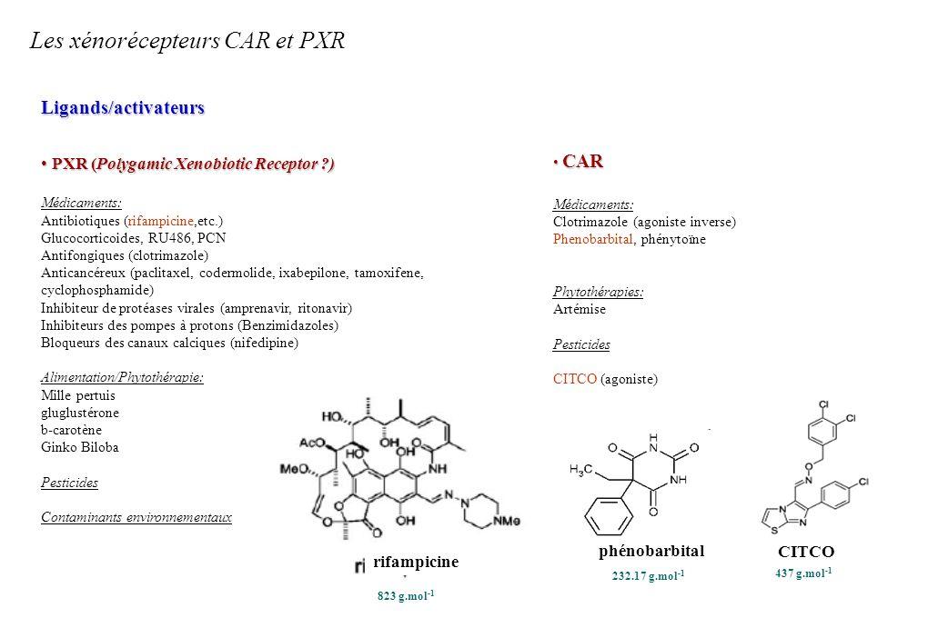 Les xénorécepteurs CAR et PXR