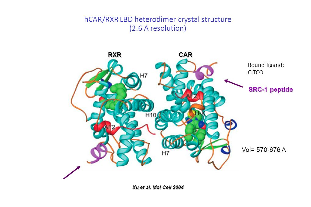 hCAR/RXR LBD heterodimer crystal structure