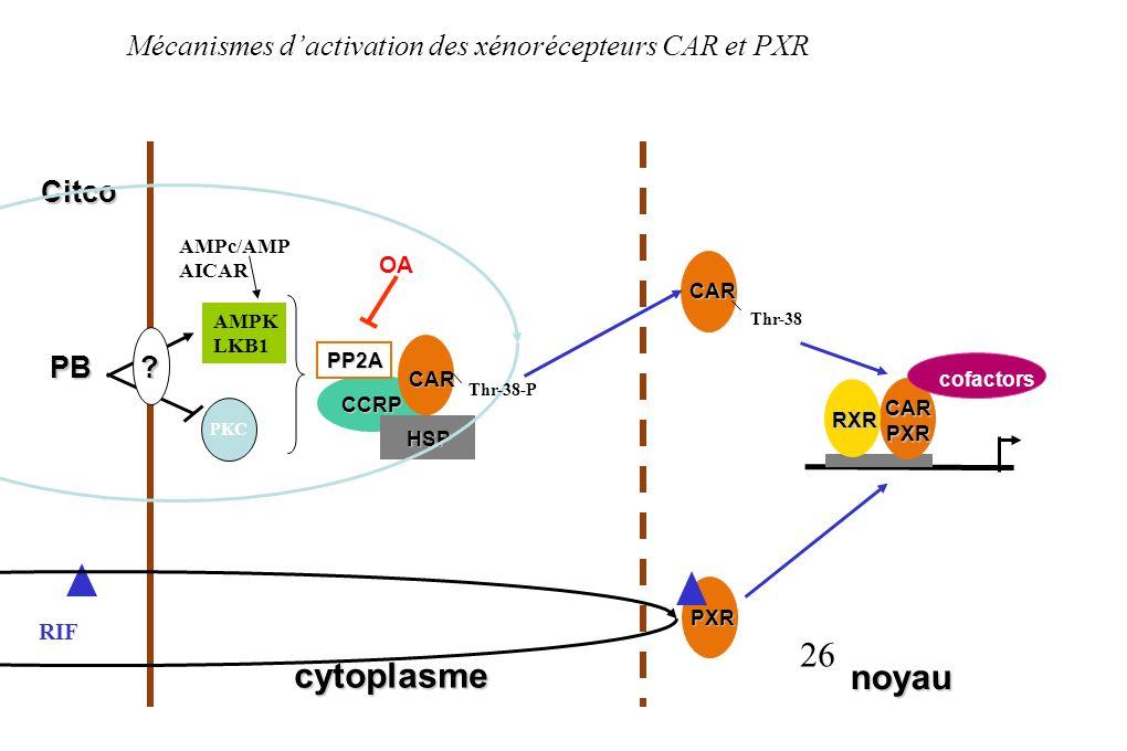Mécanismes d'activation des xénorécepteurs CAR et PXR