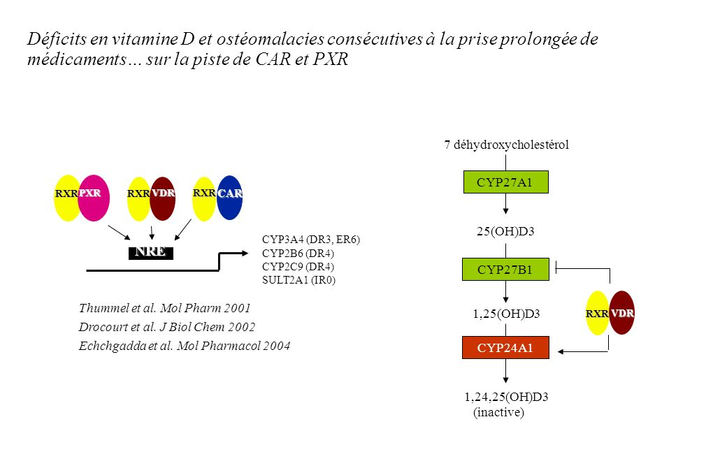 Déficits en vitamine D et ostéomalacies consécutives à la prise prolongée de médicaments… sur la piste de CAR et PXR