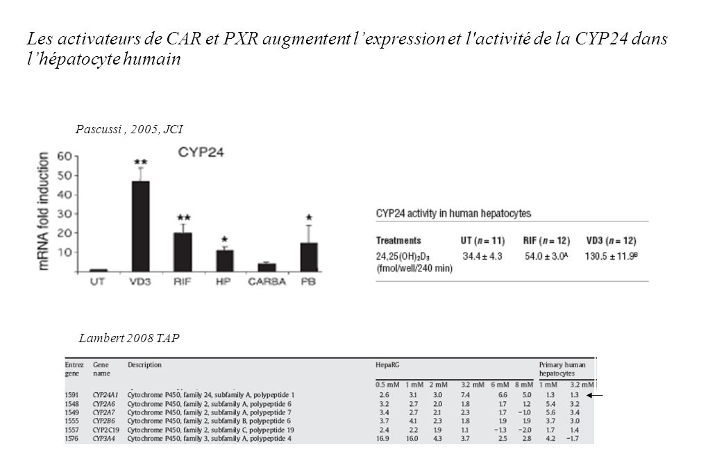 Les activateurs de CAR et PXR augmentent l'expression et l activité de la CYP24 dans l'hépatocyte humain