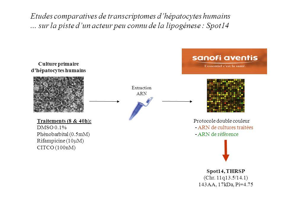 Culture primaire d'hépatocytes humains