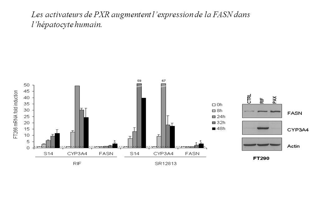 Les activateurs de PXR augmentent l'expression de la FASN dans