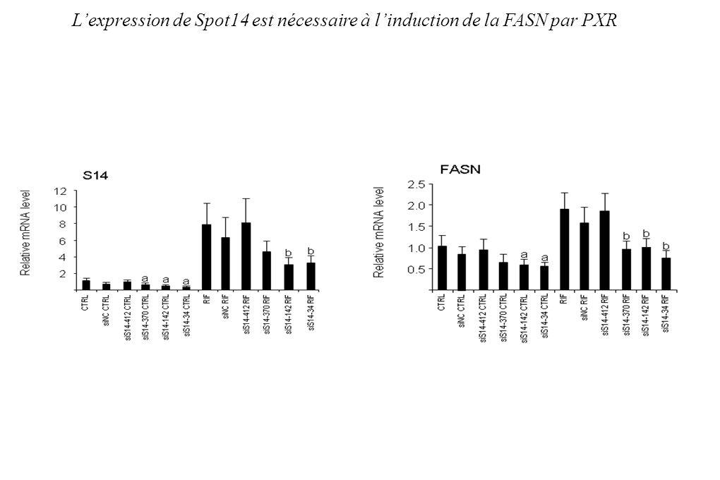 L'expression de Spot14 est nécessaire à l'induction de la FASN par PXR