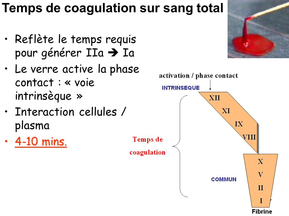 Temps de coagulation sur sang total