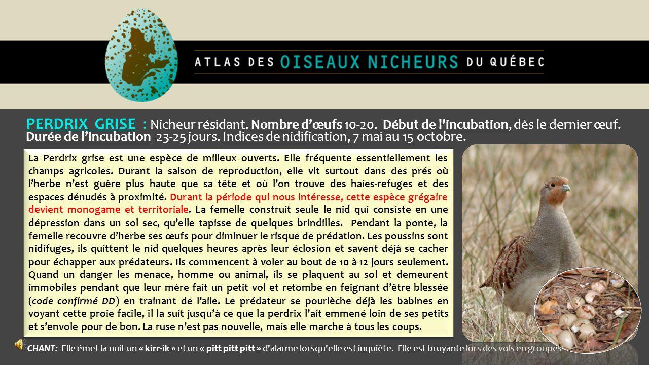PERDRIX GRISE : Nicheur résidant. Nombre d'œufs 10-20