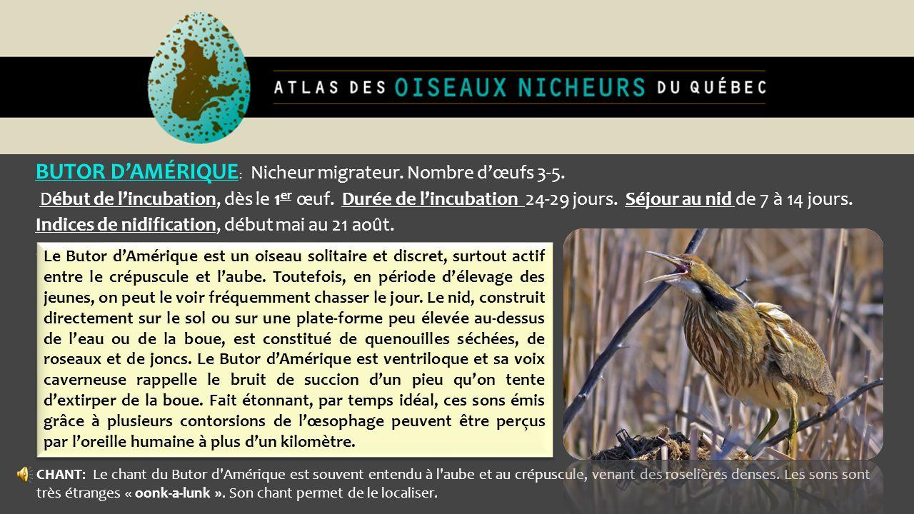 BUTOR D'AMÉRIQUE: Nicheur migrateur. Nombre d'œufs 3-5.