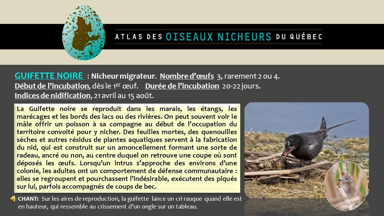GUIFETTE NOIRE : Nicheur migrateur. Nombre d'œufs 3, rarement 2 ou 4.