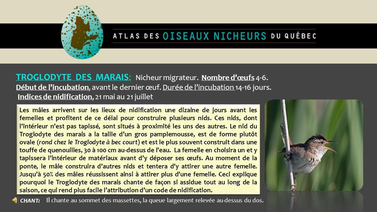 TROGLODYTE DES MARAIS: Nicheur migrateur. Nombre d'œufs 4-6.