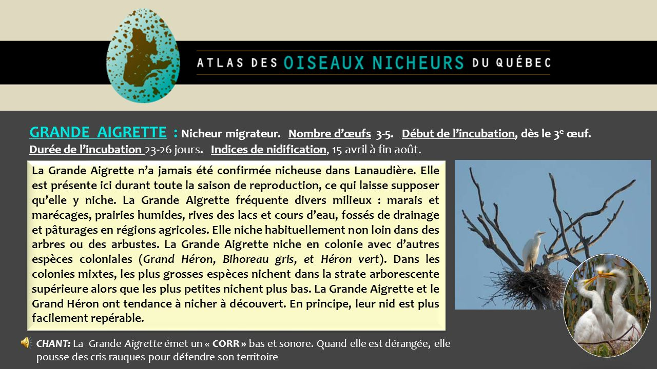 GRANDE AIGRETTE : Nicheur migrateur. Nombre d'œufs 3-5