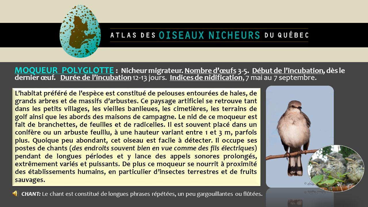 MOQUEUR POLYGLOTTE : Nicheur migrateur. Nombre d'œufs 3-5