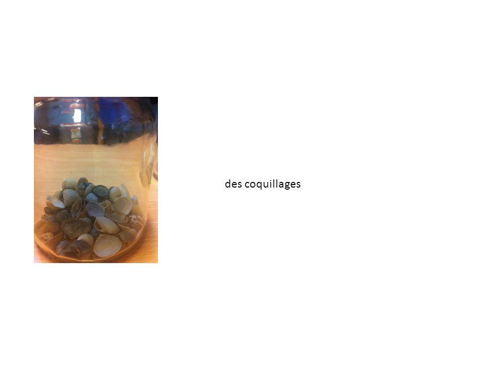 des coquillages